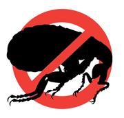Уничтожение тараканов, клопов Казань